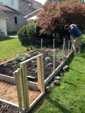 veggie garden 4
