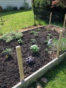 veggie garden 2